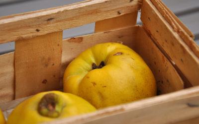 Quitten-Zitronen-Gelee
