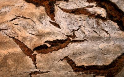 Sauerteig-Mischbrot mit 66% Roggen