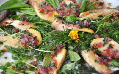 Kräuterseitlinge auf Wildkräutersalat