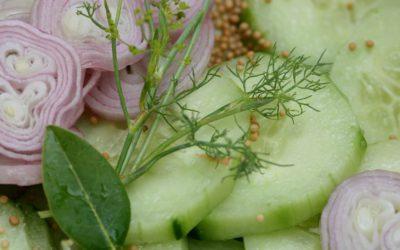 Gurkenzeit –  Rezept No. 2: Schüttelgurken